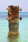 Metal Pier Prints - Rusted Iron Fishing Pier Print by David Letts