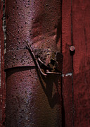 Drain Posters - Rusted Pipe and Red Barn 2 Poster by Rebecca Sherman