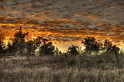 Fall Photographs Prints - Rusted Sky Print by Thomas Danilovich