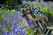 Flowering Posters - Rustic Bench Poster by Christopher Elwell and Amanda Haselock