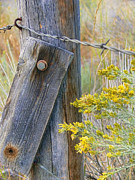 Barbwire Prints - Rustic Fence and Wild Flowers Print by Jennie Marie Schell