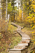 Gerald Murray Photography - Rustic Stair Climber