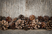 Edge Photo Posters - Rustic wood with pine cones Poster by Elena Elisseeva