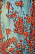 Turquoise And Rust Posters - Rusty Poster by Geraldine Alexander