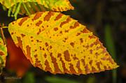 LeeAnn McLaneGoetz McLaneGoetzStudioLLCcom - Rusty Gold Leaf