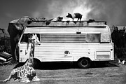 Red Pig Posters - RV Trailer Park 5D22705 Black and White Poster by Wingsdomain Art and Photography