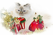 Vignette Digital Art Prints - Sacred Cat of Burma CHRISTMAS TIME II Print by Melanie Viola