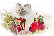 Sacred Cat Of Burma Christmas Time II Print by Melanie Viola