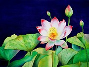 Watercolor Metal Prints - Sacred Lotus Metal Print by Robert Hooper