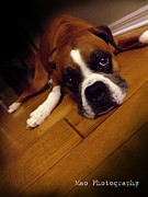 Boxer Photo Originals - Sad Boxer by Maideline  Sanchez