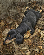 Dachshund Puppy Digital Art Posters - Sad Murphy Poster by Judy Wood