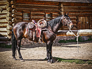 Sue Smith Prints - Saddled and Waiting Print by Sue Smith