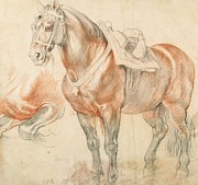 Lovers Drawings - Saddled  Horse by Pg Reproductions