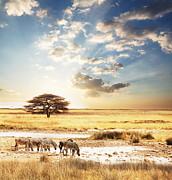 Safari Print by Boon Mee