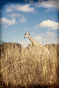 Tiffany Zumbrun - Safari Giraffe