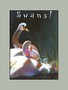 Swans... Pastels Prints - Safe Haven Print by Brooks Garten Hauschild