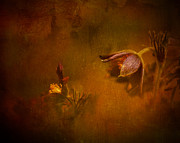 Pasque Flower Digital Art - Safe by Rikard  Olsson