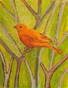 Saffron Finch Print by Anna Skaradzinska
