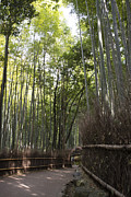 Bamboo Forest Framed Prints - Sagano -- Bamboo Forest of Arashiyama Framed Print by David Bearden