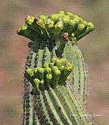 Tom Janca - Saguaro Buds 1 Week To...