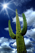 Shining Down Framed Prints - Saguaro Cactus Framed Print by Lane Erickson