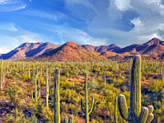 Dominic Piperata - Saguaro Forest - Late Afternoon
