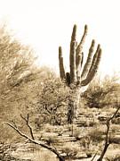Saguaro Print by Judi FitzPatrick