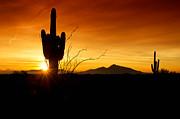 Saija  Lehtonen - Saguaro Silhouette Sunrise
