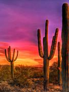 Dominic Piperata - Saguaro Sunset