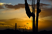 Skys Prints - Saguaro Sunset Silhoette  Print by Dave Dilli