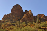 Frontier Photos - Saguaros - Symbol of the Desert Southwest by Christine Till