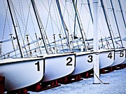 Sail Fish Prints - Sail Team Print by Laurie Martin