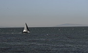 Santa Cruz Sailboat Art - Sailboat by Nick Garner