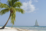 Getting Away Prints - Sailboat passing by tropical beach Print by Sami Sarkis