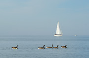 Scott Hupertz - Sailboat with Geese