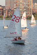 Mit Prints - Sailboats on the Charles River I Print by Clarence Holmes
