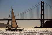 San Francisco Bay Posters - Sailing in the Bay Poster by Cheryl Young