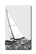 Sailboats Drawings Framed Prints - Sailing  Framed Print by Jack Pumphrey