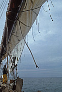 Wildlife And Nature Photos Art - Sailing Skipjack by Skip Willits
