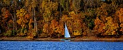 Sailing The Mississippi River 3 Print by Todd and candice Dailey