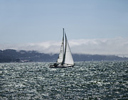 Sailing The Sf Bay Print by Dee  Savage