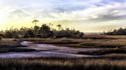 Lynn Palmer Art - Saint Marks Wetland Sunset by Lynn Palmer