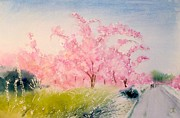 All - Sakura - Cherry blossom by Yoshiko Mishina