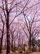 Sakura Tree Print by Andrea Anderegg