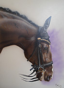 Dutch Warmblood Paintings - Salinero by Bas Hollander