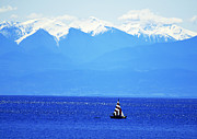 Salish Sea Sail Print by Annie Pflueger