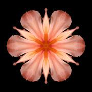 Salmon Daylily I Flower Mandala Print by David J Bookbinder