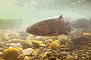 Chinook Salmon Prints - Salmon Portrait- Abstract Print by Tim Grams