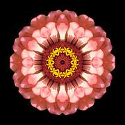 Salmon Zinnia Elegans Iv Flower Mandala Print by David J Bookbinder
