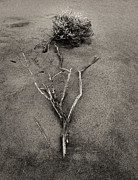 Drift Wood Framed Prints - Salt Bush Framed Print by Tim Nichols